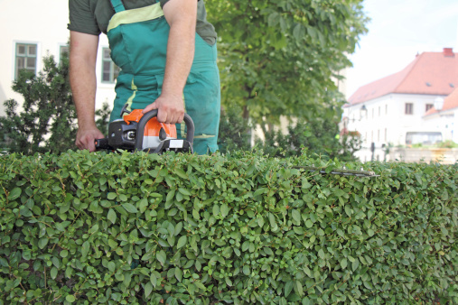 Entretien espaces verts pour entreprises collectivit s for Entretien espace vert entreprise